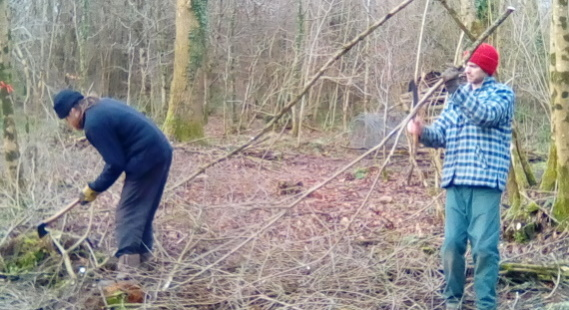 Woodland management through coppicing